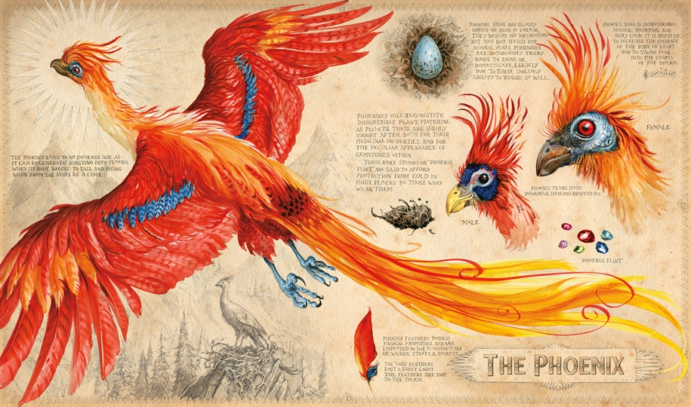 Harry Potter - Jim Kay - Phoenix